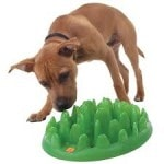 green dog feeder